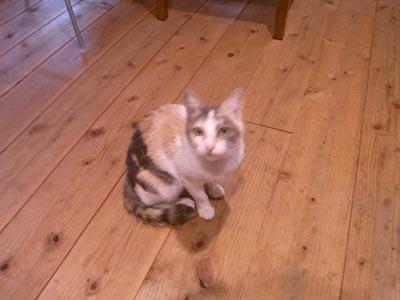 JETLINKの猫チーバくん4