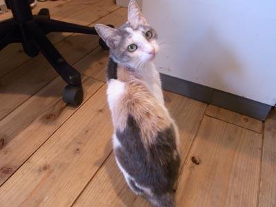 JETLINKの猫チーバくん1