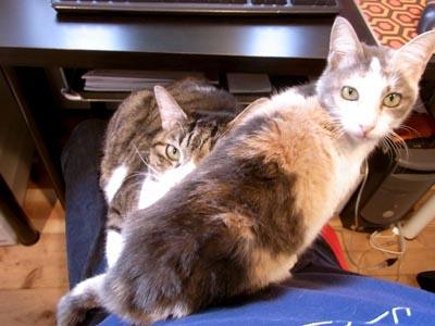 JETLINKの猫たち